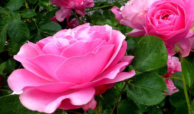 je vois la vie en rose (S)...