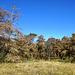 Waldsterben: klimabedingt - Forest dieback: climate-induced
