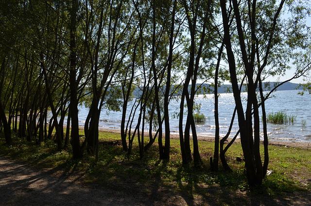 Бакотский залив, Деревья у берега