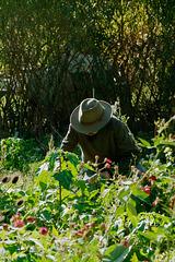 Le jardinier jardine