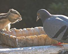 Meeting of species
