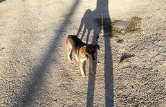 Shady cuban dog