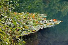 Herbst am Kleinen Montiggler See - (PIP)