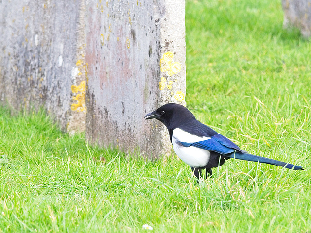One for Sorrow.....