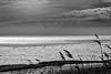 The Wadden Sea - Das Wattenmeer (135°)