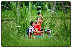 En scooter dans les rizières