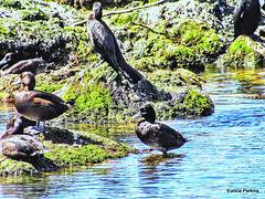 In Lake Rotorua