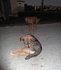 Duo cubain