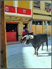 Fiestas de Falces (Navarra), 2