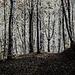 Frühlingsstimmung in einem Buchenwald - Spring mood in a beech forest