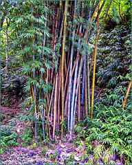 Bambù speciali multicolor a Réunion  (384)