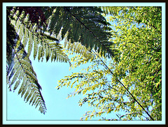Tree Fern and Bamboo.