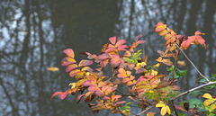 Autumn Snippets