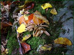 Pêle-Mêle d'automne (clic sur photo)