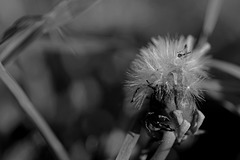 Insektenkuschelkissen