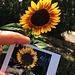 Sunflower + Instant Sunflower