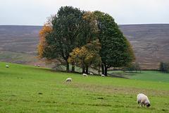 The Moorfield Trees - Autumn