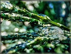 Wassertropfen als Vergrößerungsglas.  ©UdoSm
