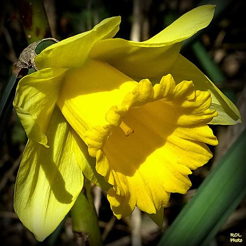 à coup de trompes, elle annonce le printemps..!