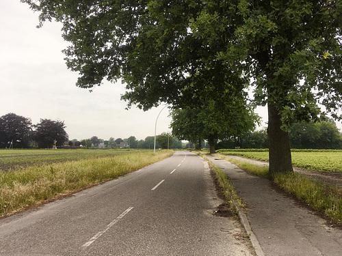 Landstraße hinter Halstenbek // -landstrasse 5476