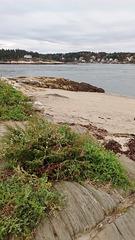 Végétation de plage sauvage / Vegetação de praia selvagem