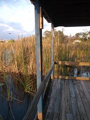 Observons et écoutons la vie sauvage du Lac Cecile....