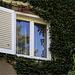Fenster mit Efeu