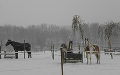 Snow Guards