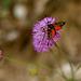 Champêtre : Fleur et papillon