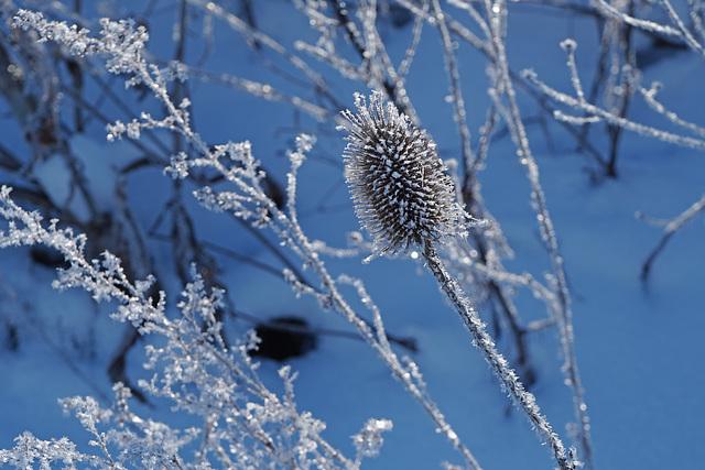 Eisblumen - Frost flowers