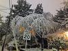 Snow Limit 20
