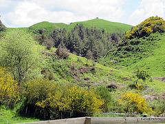Green Valley.