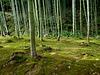 Bamboo fairyland