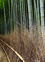An exquisite fence of bamboo twigs