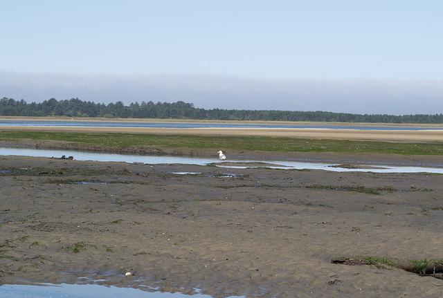 Netarts Bay, OR shellfishing (#1151)