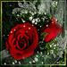 888ff69a7af3cddbfafb3827987eba88.jpg
