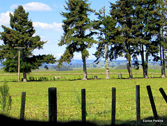 Farm Fence.