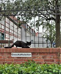 Career-Cat...