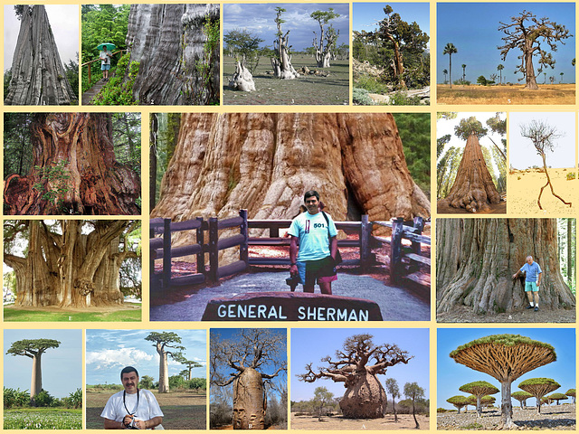 Some Spectacular Trees We Saw in North America and Africa