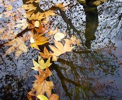 fall reflected PIP