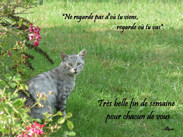 le chat et citation
