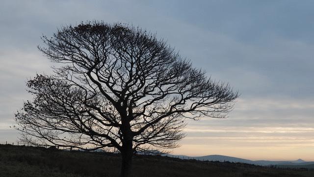 #52 - Peter Castell - Park Moor - 12̊ 4points