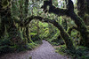 enchanted_forest