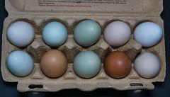 Eier verschiedener Hühnerrassen und Andere (PiP)