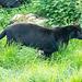 Panther three