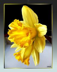 Osterglocke für Ostersonntag... ©UdoSm