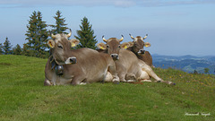 Drei die sich mögen, geniessen die herrliche Alpenluft
