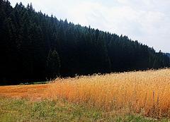 Zigzag landscape