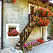 Una scala che esprime amore per la propria casa - (662)