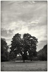 Sept 15: tree and setting sun